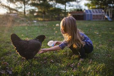 Girl feeding hen on field at farm - CAVF38322
