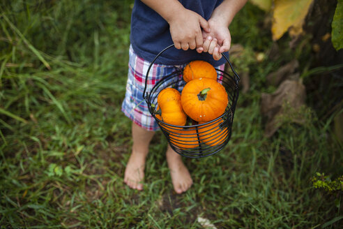 Low section of boy holding bucket full of pumpkins in yard - CAVF38403