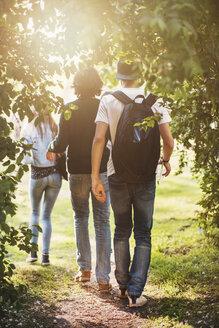 Rear view of teenagers walking at park - MASF03993