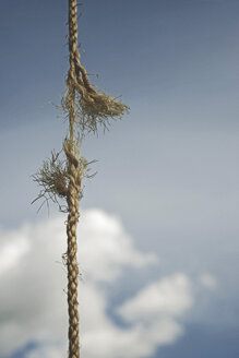 Frayed rope against sky - MASF04406