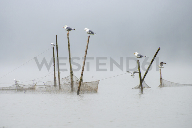 Seagulls perching on poles of fishing net on sea against clear sky - MASF04655