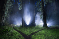 Tranquil view of forest at Jedediah Smith Redwoods State Park during night - CAVF38674