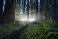 Scenic view of forest at Jedediah Smith Redwoods State Park - CAVF38680