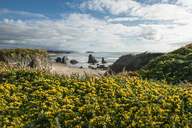 Idyllic view of flowering plants at shore against cloudy sky - CAVF38683