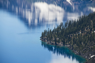 High angle view of trees by Crater Lake - CAVF38755