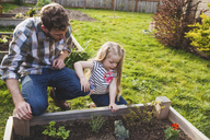 Father and daughter looking at plants growing in raised bed - CAVF38914