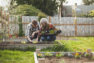 Smiling couple planting saplings in raised bed at backyard - CAVF38926
