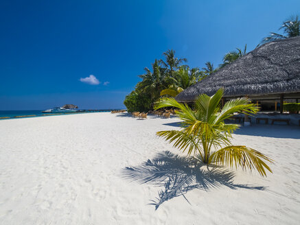 Maledives, Ross Atoll, beach bar and sandy beach with palms - AMF05694