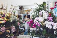 Female florist working in flower shop - CAVF39144