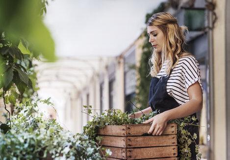 Florist carrying basket of leaves - CAVF39856