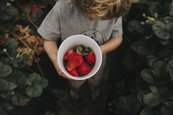 High angle view of boy holding strawberries in container while standing on field - CAVF40120