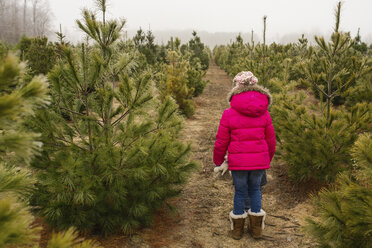 Rear view of girl standing in Christmas tree farm sky during winter - CAVF40339