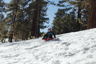 Low angle view of boy tobogganing on snow covered field in forest - CAVF41803