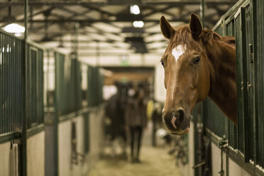 Horse in stall at stable - MASF04848