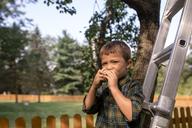 Portrait of boy eating pear on ladder at farm - CAVF42428