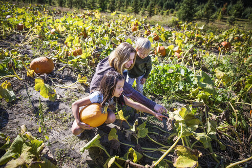 High angle view of family harvesting in pumpkin field - CAVF42965