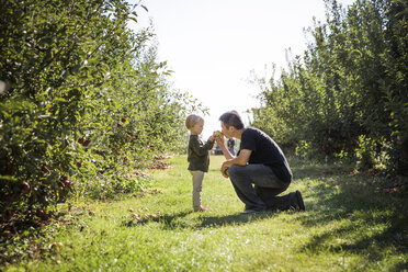 Father with son smelling apple at orchard - CAVF42974