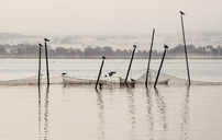 Birds and fishing net in sea - MASF05744