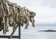 Dried fish hanging on rack by sea - MASF05870