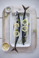 Directly above shot of fishes garnished with lime slices - MASF05879