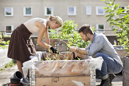 Young Caucasian couple gardening at urban garden - MASF05918