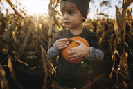 Boy with pumpkin looking away while standing on field - CAVF43481