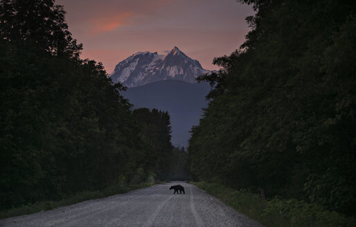 Silhouette bear on road amidst trees against sky - CAVF43565