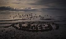 Birds flying over stones at beach - CAVF43568