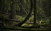 Trees growing at forest - CAVF43574