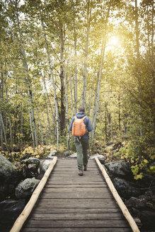 Rear view of man walking on footbridge in forest - CAVF43766