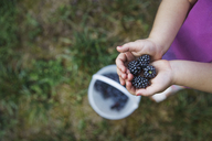 Cropped image of girl holding blackberry fruits - CAVF44105
