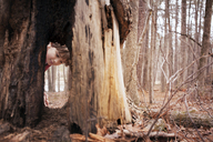 Boy (6-7) looking at tree - CAVF44213