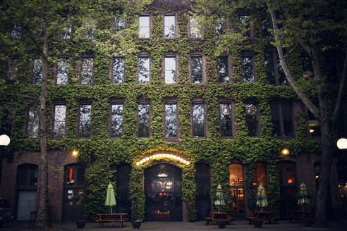Low angle view of ivy covered illuminated building - CAVF44756