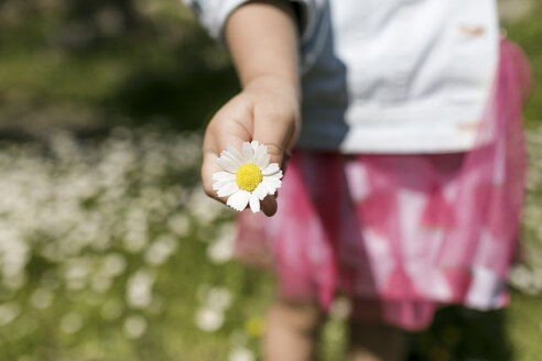 Girl's hand holding flower, close-up - KMKF00220