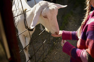 Midsection of girl feeding goat - CAVF45949