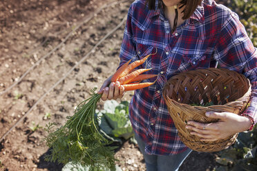 Midsection of woman holding fresh carrots while carrying basket on field - CAVF46201
