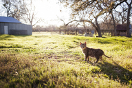 Tabby cat on field during sunny day - CAVF46213