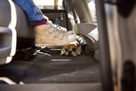 Low section of boy with English Bulldog in car - CAVF46603