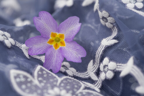 Blossom of primrose on floral patterned cloth, close-up - CRF02789