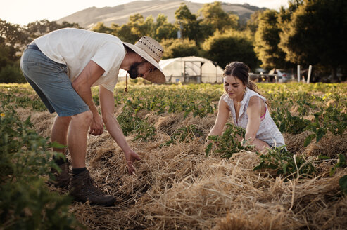Male and female farmers working on field - CAVF47436