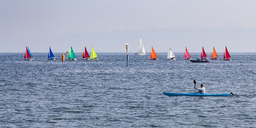 Switzerland, Thurgau, Arbon, Lake Constance, Regatta - WD04593