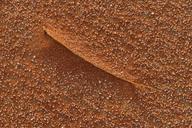 United Arab Emirates, Rub' al Khali, desert sand and dried blade of grass - ESF01574