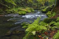 Czech Republic, Bohemian Switzerland, Ticha Souteska near Hrensko, River Kamnitz in the Edmundsklamm with moss covered sandstone rocks - RUEF01851
