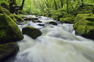 United Kingdom, England, Cornwall, Liskeard, River Fowey, Golitha Falls - RUEF01863