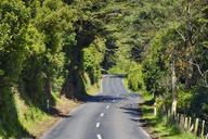New Zealand, South Island, Otago, Otago Peninusula, Dunedin, rural road - RUEF01872