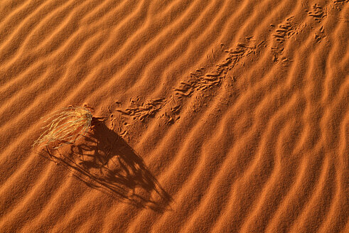 Algeria, Tassili n'Ajjer National Park, Sahara desert, sand ripples, dried grass on a sand dune - ESF01592