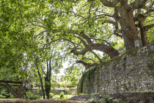 Greece, Pelion, Tsagarada, very old plane trees - MAMF00087