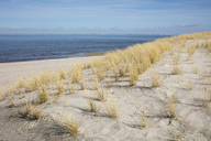 Germany, Schleswig-Holstein, North Frisian Islands, Sylt, List, dune and marram grass - WIF03506