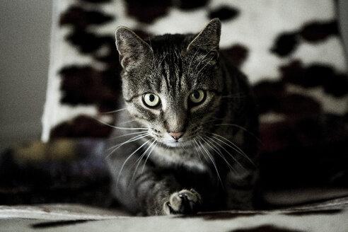 Cat sitting on sofa - FLLF00016
