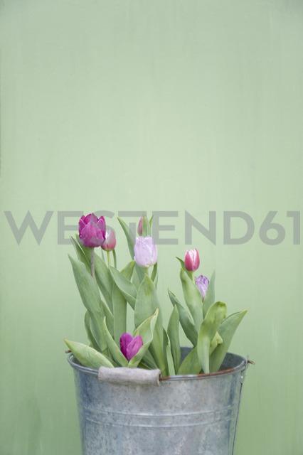 Tulips in metal bucket - GISF00332